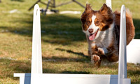 Born to Run Summer Classic Flyball Tournament